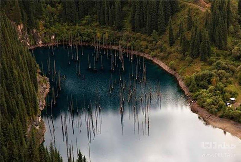 جنگل زیر آب