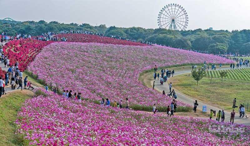 پارک هیتاچی ژاپن