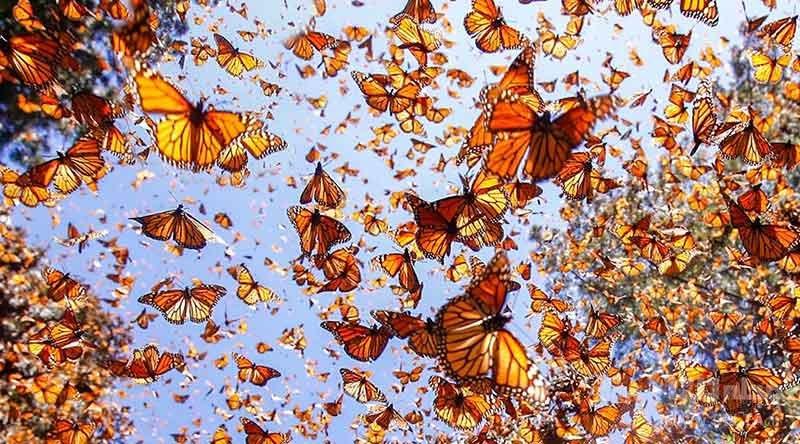پروانههای رنگارنگ در شیلاندر