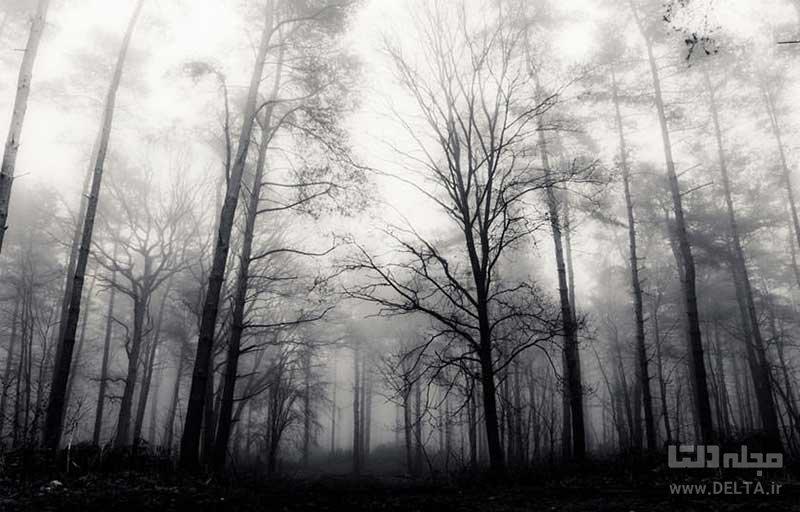 جنگل تسخیرشده هویا باچو
