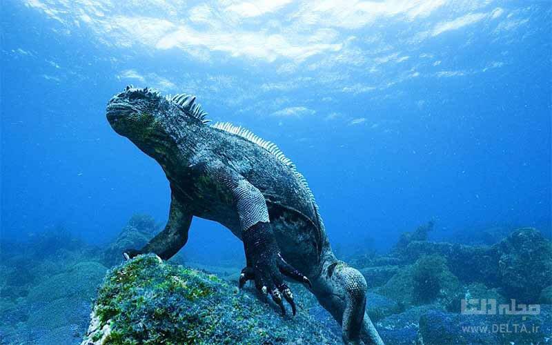 غواصی اسکوبا در اقیانوس آرام